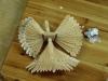 Štípání holubiček 2010